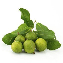 Macadamia olie: een ingrediënt van de verzorgingskuur Repair