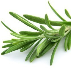 rosemary, essential oil damaged hair, preventing hair loss