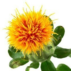 safflower oil protects skin and damaged hair