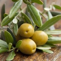 biologische olijf olie biologische haarverzorging